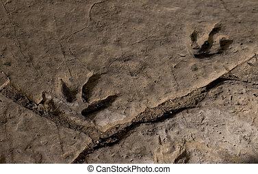 very interesting dinosaur footprint in Georgia