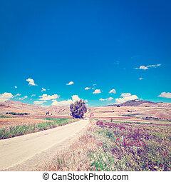Asphalt Road - Winding Asphalt Road between Spring Fields of...