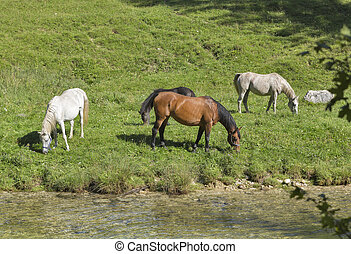 Horses grazing in a meadow near the river