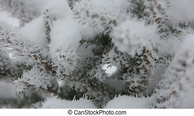 Beautiful winter rime on the branch.