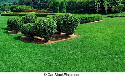 Garden. Group of trees and bushes. Summer.