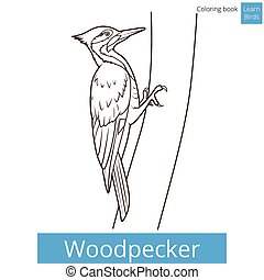 Woodpecker bird learn birds coloring book vector -...