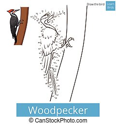 Woodpecker bird learn to draw vector - Woodpecker learn...