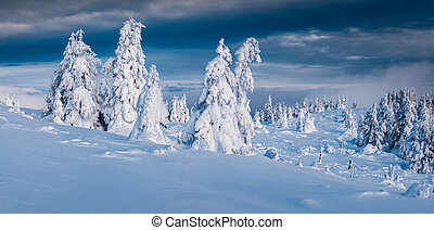 Trees covered with hoarfrost and snow in mountains. Cold...
