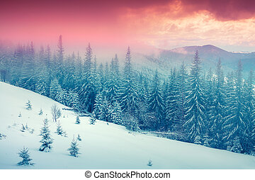 Colorful winter sunrise in the foggy mountain forest....