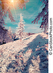 Snow-covered fir tree in the mountain forest. Instagram...
