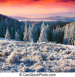 Colorful winter sunrise in the misty mountains Instagram...