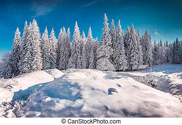 Montaña, invierno, nevoso, soleado, mañana, bosque