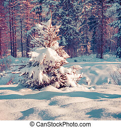 Snow-covered fir tree in the city park. - Snow-covered fir...