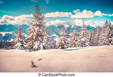 Snow-covered fir tree in the mountain forest.