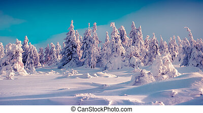Trees covered with hoarfrost and fresh snow glowing bright...