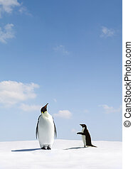 Rejection - Emperor Penguin rejects Adelie penguin