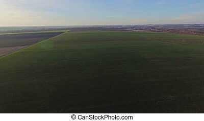 Aerial view of field with wheat in autumn