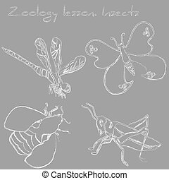 Zoology lesson. Insects. Drawn with chalk on the blackboard.