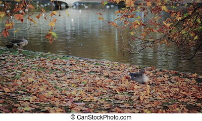 Ducks relax on the bank of a river