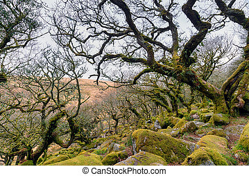 Gnarled Oak Forest - Gnarled oaks at Wistman's Wood on...
