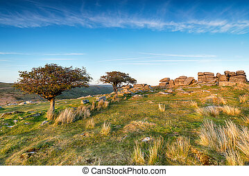 Coombestone Tor - Stunted Hawthorn trees at Commbestone Tor...