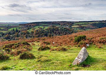 Autumn Moorland - Autumn moorland on Dartmoor National Park...