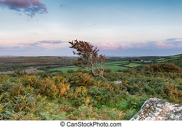 Cornish Moorland - Wild moorland in Cornwall with a windsept...