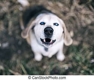 Pet with Personality - Blind dog looking up and showing its...