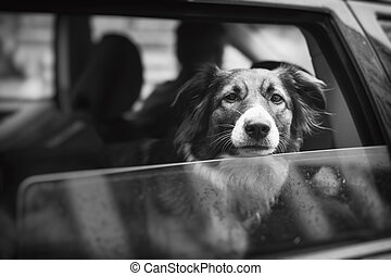 Pet with Personality - Cuious dog is looking out a car...