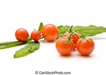 small traditional garden tomatoes - collection of small...