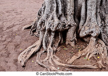 Root of the Tree