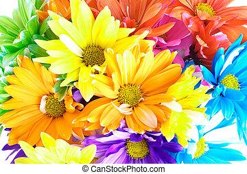 Vibrant Multicolored Daisy Background - Vibrant Multicolored...