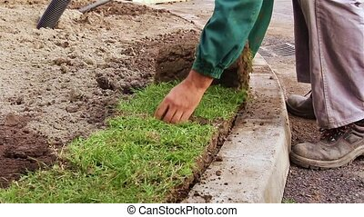 Unrolling grass, applying turf roll - Man is unrolling...