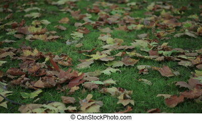 Leaves falling on the ground