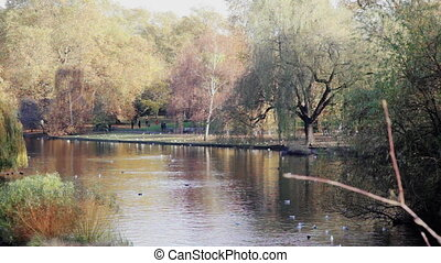 View of a pond in St. James Park