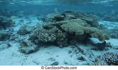 Sealife of Coral Reef