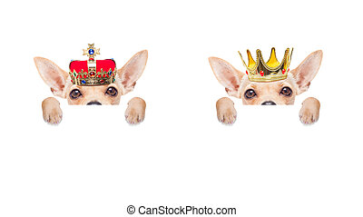 crown king dog - chihuahua couple of dogs as king with crown...