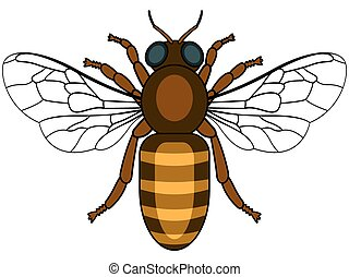 Bee - Illustration of the bee insect icon