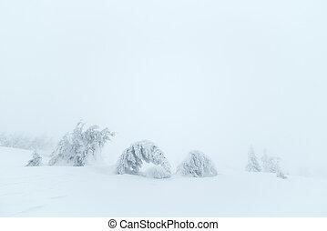 abete, albero, in, neve,
