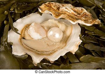 Open oyster with pearl - Large white pearl inside an open...