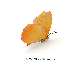 Orange Butterfly Isolated - 3d isolated characters on white...