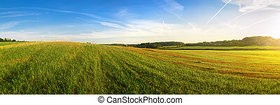 Panoramic summer landscape