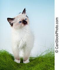 Kitten in first grass