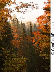 Northwoods Autumn Dawn - Beautiful view of a northern...