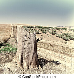 Tree Stump - The Tree Stump in Front of Olive Groves among...
