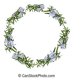 Rosemary Herb Flower Garland - Rosemary herb flowers forming...