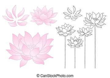 Vector lotus flowers and petals - Vector illustration lotus...