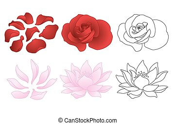 Vector rose and lotus