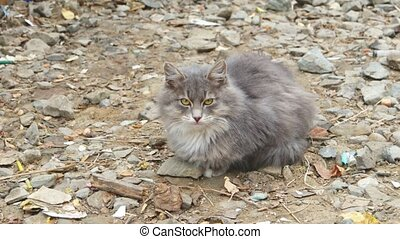 Gray cat lying on gravel and looking at camera