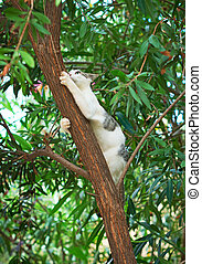 Feral cat climbing on the tree