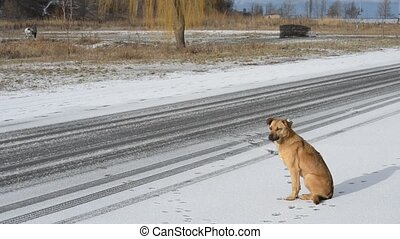 Homeless dog by the side of the road. It starts snowing.