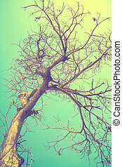dry tree and the sky,vintage toning