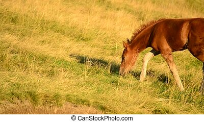 Cute foal in a field in Mountains at dawn