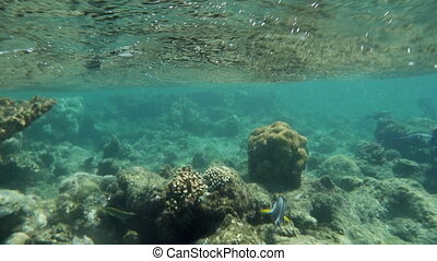 Coral Reef By the Water Surface in Red Sea - Slow motion...